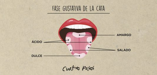 (Español) FASE GUSTATIVA DE LA CATA