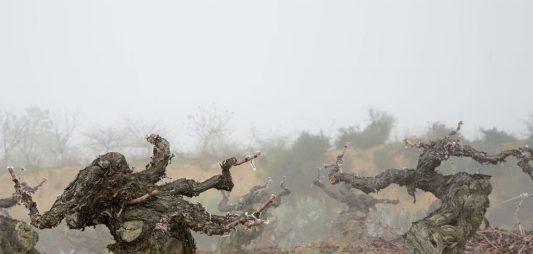 ¿Cómo influye la altura del viñedo en el vino?