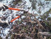 Las cepas que semejaban árboles libres