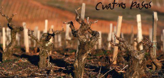 El vino en el Bierzo: 2000 años de historia